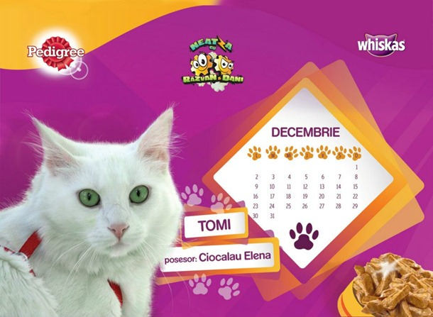 tomi-animalutul-lunii-decembrie-calendar-wiskas-razvan-si-dani-antena1
